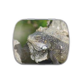 Iguana, Curacao, Caribbean islands, Photo Jelly Belly Tins