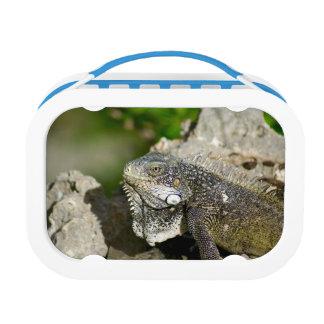 Iguana, Curacao, Caribbean islands, Photo Lunch Box