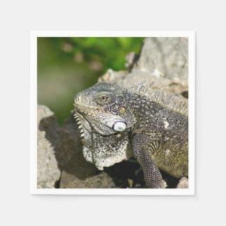 Iguana, Curacao, Caribbean islands, Photo Paper Napkin