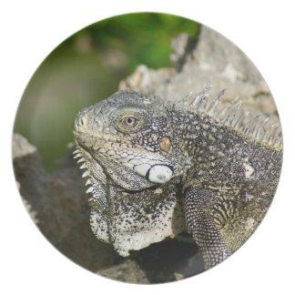 Iguana, Curacao, Caribbean islands, Photo Plate