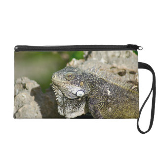Iguana, Curacao, Caribbean islands, Photo Wristlet