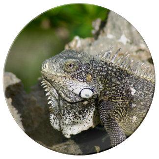Iguana, Curacao, Caribbean, Photo Porcelain Plate