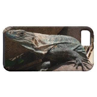 Iguana curiosa iPhone 5 funda
