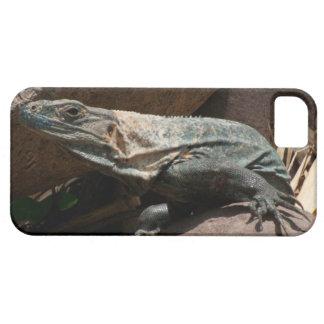 Iguana curiosa iPhone 5 carcasas