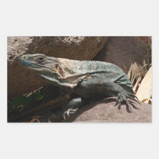 Iguana curiosa pegatina rectangular