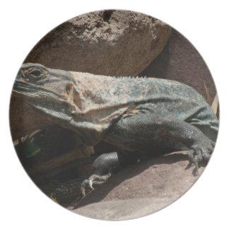 Iguana curiosa plato de comida