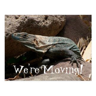 Iguana curiosa postal