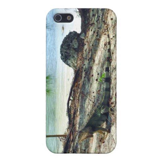 Iguana de Bahama iPhone 5 Funda