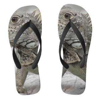 Iguana de cuernos