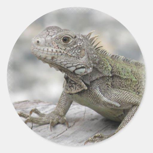 Iguana de cuernos más enferma pegatina redonda
