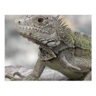 Iguana de cuernos postales