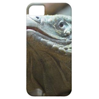 Iguana de Gran Caimán iPhone 5 Fundas