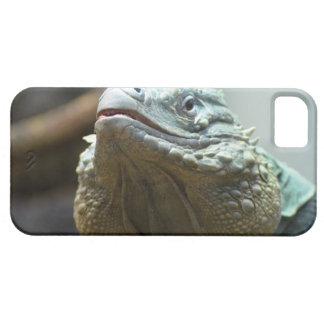 Iguana de Gran Caimán iPhone 5 Cárcasa