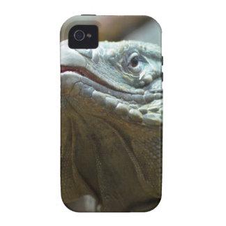 Iguana de Gran Caimán Vibe iPhone 4 Carcasa