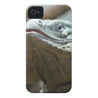 Iguana de Gran Caimán iPhone 4 Protectores