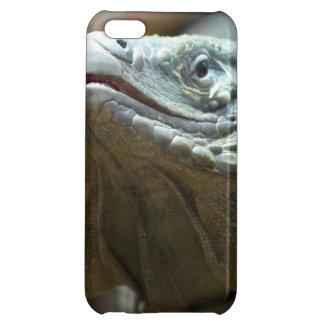Iguana de Gran Caimán