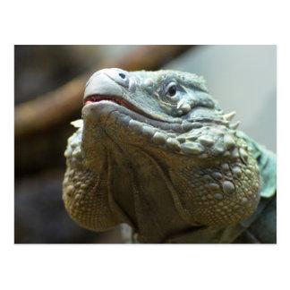 Iguana de Gran Caimán Postal