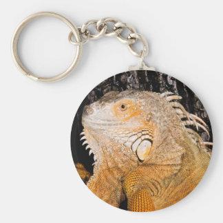 Iguana de la iguana llavero redondo tipo pin