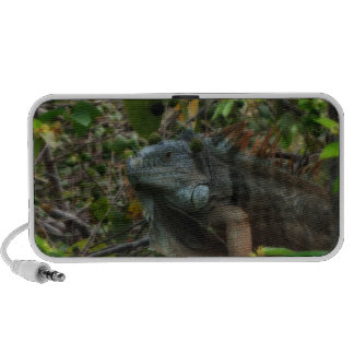 Iguana de la selva altavoz de viajar