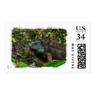 Iguana de la selva estampillas