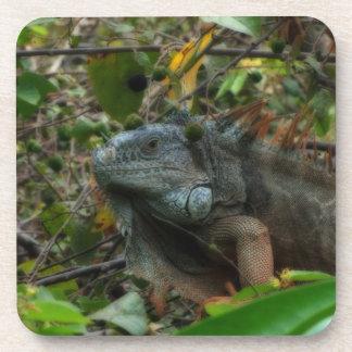 Iguana de la selva posavaso