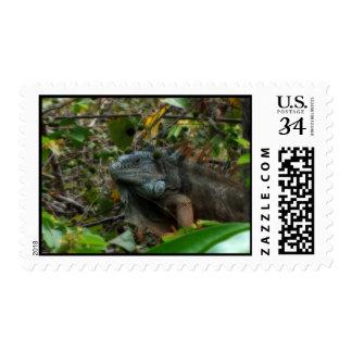 Iguana de la selva sello postal