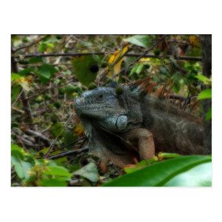 Iguana de la selva tarjetas postales