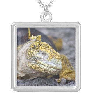 Iguana de la tierra colgante cuadrado
