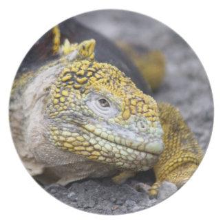Iguana de la tierra platos