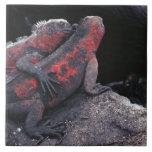 Iguana de las Islas Galápagos Azulejo Cuadrado Grande