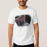 Iguana de las Islas Galápagos Camisas