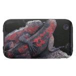 Iguana de las Islas Galápagos Carcasa Resistente Para iPhone