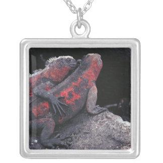 Iguana de las Islas Galápagos Colgante Cuadrado