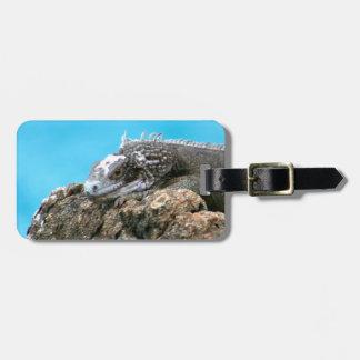 Iguana de mirada agradable de St Thomas U.S.V.I Etiqueta Para Equipaje