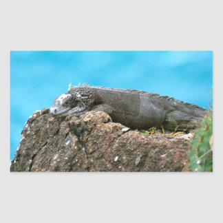 Iguana de mirada agradable de St Thomas U.S.V.I Pegatina Rectangular