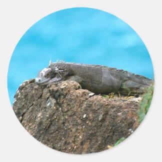 Iguana de mirada agradable de St Thomas U.S.V.I Pegatina Redonda