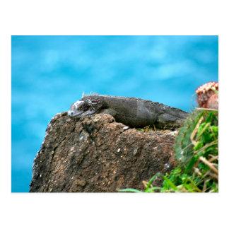 Iguana de mirada agradable de St Thomas U.S.V.I Tarjetas Postales