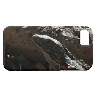 Iguana de punta iPhone 5 fundas