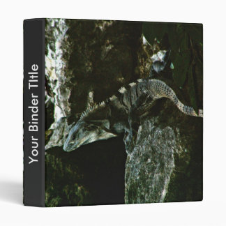 Iguana de Spinytail