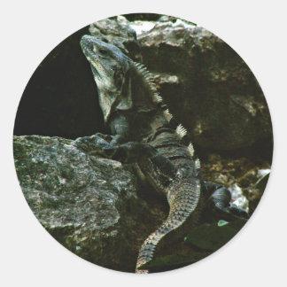 Iguana de Spinytail Pegatina Redonda