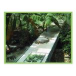 Iguana del lagarto en el parque zoológico postal