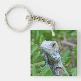 Iguana del peekaboo llavero cuadrado acrílico a una cara