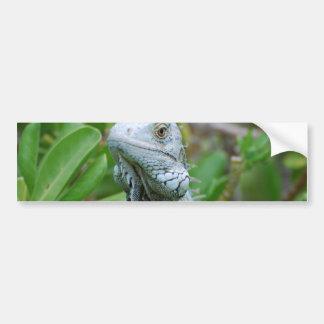 Iguana del peekaboo pegatina para auto