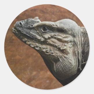 Iguana del rinoceronte pegatina redonda
