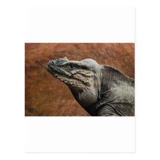 Iguana del rinoceronte postal