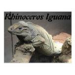 Iguana del rinoceronte tarjeta postal