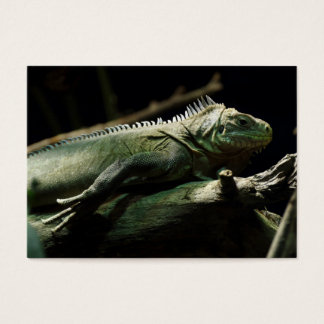 Iguana delicatissima business card