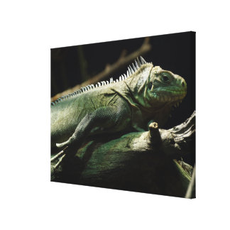 Iguana delicatissima canvas print