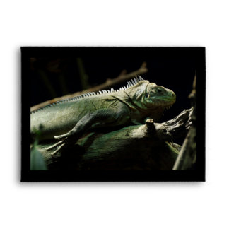 Iguana delicatissima envelope