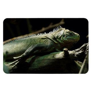 Iguana delicatissima rectangular photo magnet